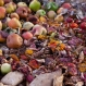 New Jersey Cutting Food Waste to Help Climate