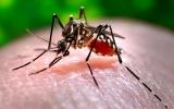 More Mosquito Days Increasing Zika Risk in U.S.