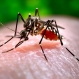 More Mosquito Days Increasing Zika Risk in U.S.