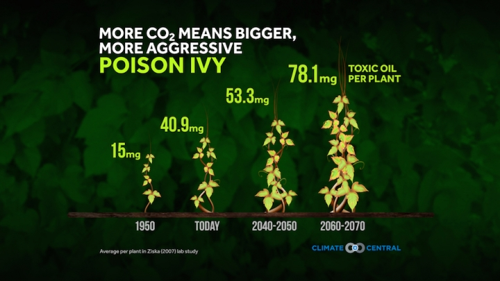 poison ivy outbreak