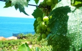 Image of Day: Exotic Crops May Become the Norm in UK