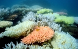 Climate Change Poses Risk to Great Barrier Reef Species