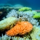 Native Great Barrier Reef Species At Risk