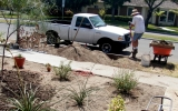 Drought-Hardy Yards Could Ease Californian Heat Waves