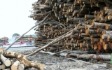 Europe Aims to Close Loophole on Wood Energy