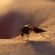 West Nile Crippling El Pasoans, Rising Temperatures Play Role