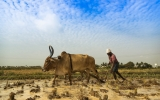 New Findings Show How Climate Change Is Influencing India's Farmer Suicides