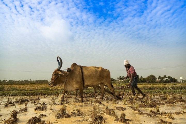 india s role in the climate change Seeds of change (2013) : in india, climate change is forcing farmers to adapt in order to survive  climate change is having a massive impact on indian farmers  india's role in global.