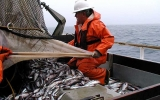 Image of the Day: Fish Sticks! A One-Two Climate Punch