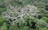 NASA Warns of Climate Change's Impact on the Amazon
