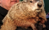 Groundhog Day in a Year Without a Winter