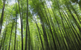Image of the Day: Bamboo, Nature's Renewable Resource
