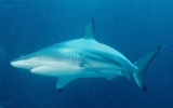Hybrid Sharks Discovery: Is There a Global Warming Connection?
