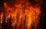 Wildfires Tied to Drought, Heat & Topography, Not Beetles