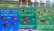 Ocean Acidification Process