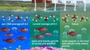 Ocean Acidification Process