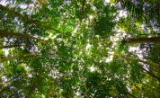 Amazon Trees Removed Third Less Carbon