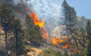 Beetles Get Pass On Spread of Wildfires