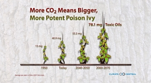 Poison Ivy in a Warming World