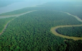 Tropical Forests Play Huge Role in Inhaling Emissions