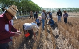 Warming Will Reduce Wheat Production, Research Shows