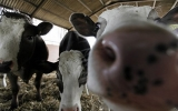 Scientists Say Tax Meat to Help Cut Methane Emissions
