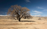 Global Warming Upped Heat Driving California's Drought