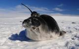 Ocean Warming: Probing a Blue Abyss