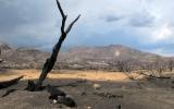 Moisture Shortfall, Heat Threaten Southwestern Forests