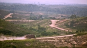Deforestation Rates Drop, But Forests Ailing