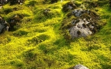 Image of the Day: Moss May Explain Earth's Mini Ice Ages