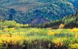 Shift in Boreal Forest Has Wide Impact