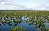 As Sea Level Rises, Everglades Become More Vital to South Florida's Survival