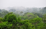 World Pays Ecuador Not to Extract Oil From Rainforest