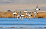 Image of the Day: Low Water Flow Triggers Avian Cholera