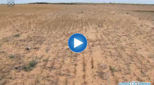 Extreme Weather 101: Drought & Our Changing Climate