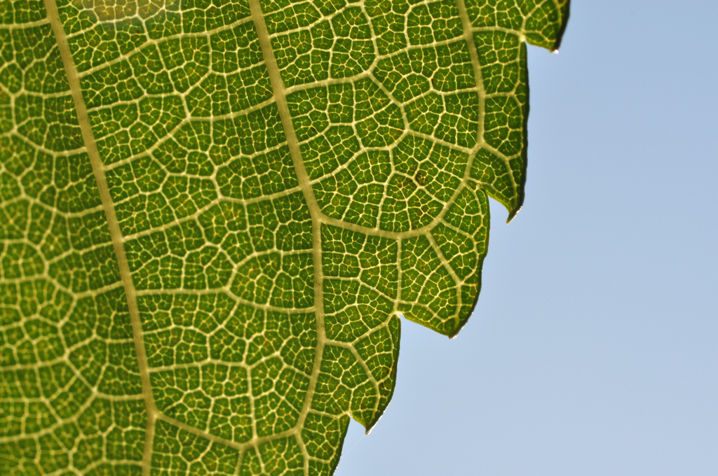 artificial photosynthesis closer to boosting renewables