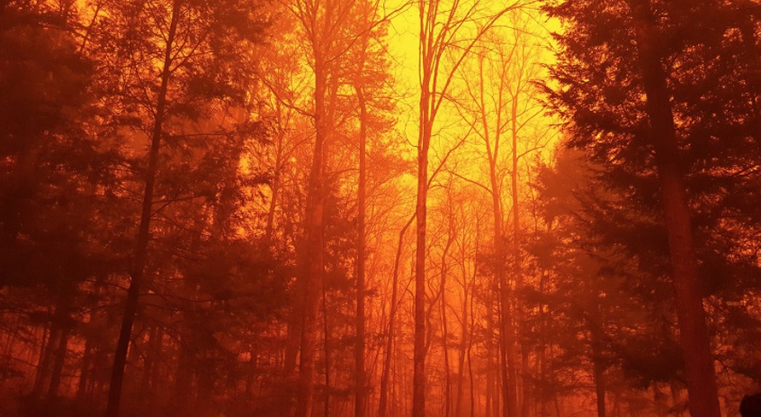 Tennessee Wildfire is \'Unlike Anything We\'ve Ever Seen\' | Climate ...