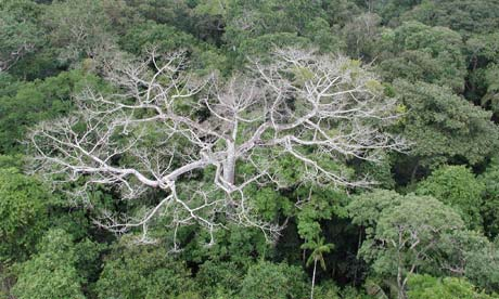 Drying Amazon Could Be Major Carbon Concern