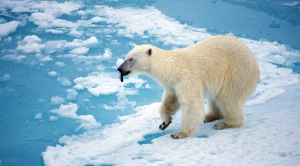 Congress Targets Species Act and Its Climate Benefits
