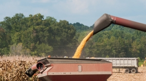 Climate Change Threatens Almighty U.S. 'King Corn'