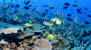 Protecting Ocean Waters Will Aid Climate Adaptation