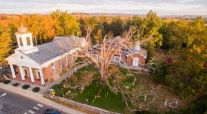 Heat, Then Deluge Fell a Town's Beloved 600-Year-Old Oak