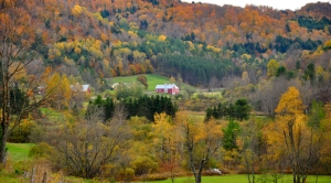 Drought, Climate Impact Fall Foliage in Complex Ways