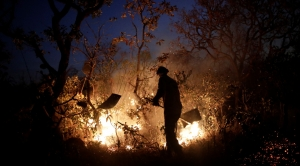 Brazil's Worst Month Ever for Forest Fires Blamed on Human Activity