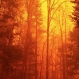 Tennessee Wildfire is 'Unlike Anything We've Ever Seen'