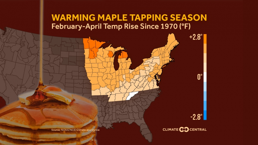 Warming Maple Tapping Season