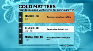 Fruit Trees Need Winter Chill for Spring Growth