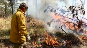Breathing Fire: 'If we don't burn it, nature will': Georgia blazes old fears, leads nation in prescribed fire