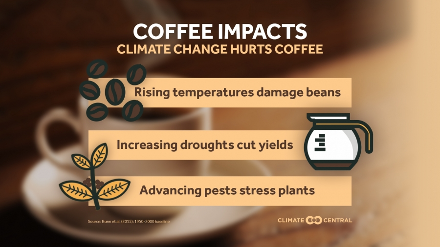 Here's How Climate Change Hurts Coffee